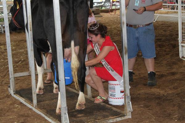 008 Milking Contest 2013.jpg