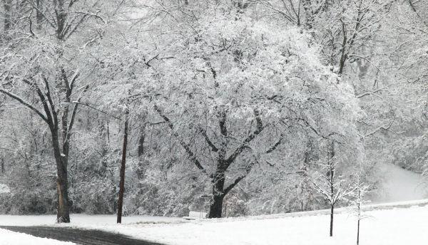 008 March Snow.jpg