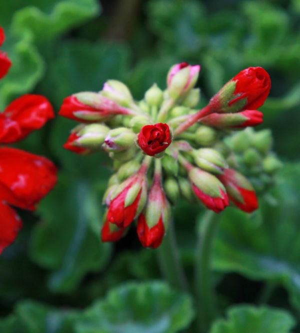 021 Early Summer Blooms 2014.jpg