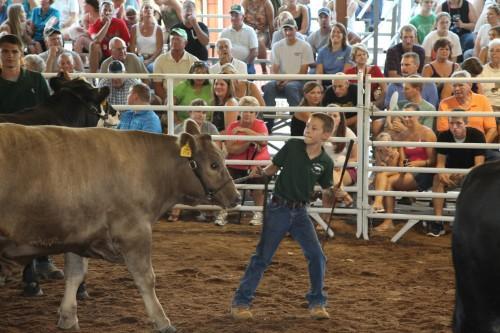 016 Steer.jpg