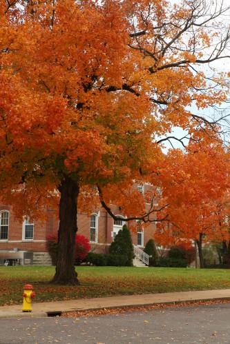 013 Fall trees.jpg