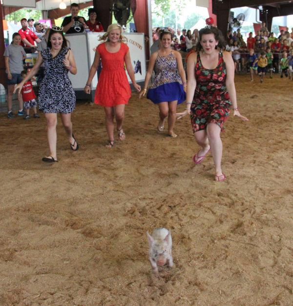 003 Pig Chase 2013.jpg