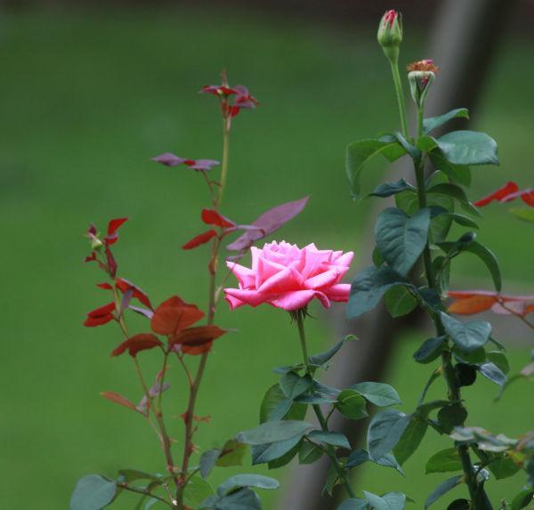 004 Early Summer Blooms 2014.jpg