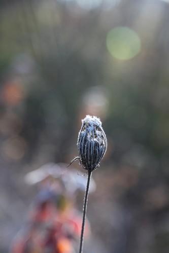 012 Frost.jpg
