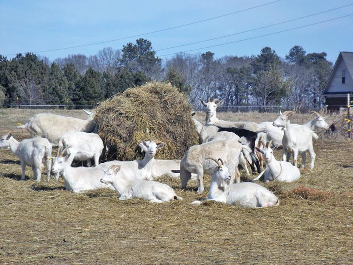 time of the essence on goat farm contest local news goat farm essay contest deadline near