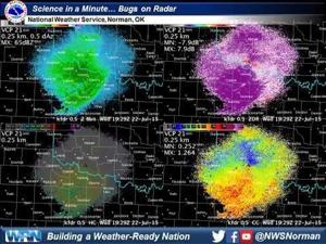 Science in a Minute: Bugs on Radar