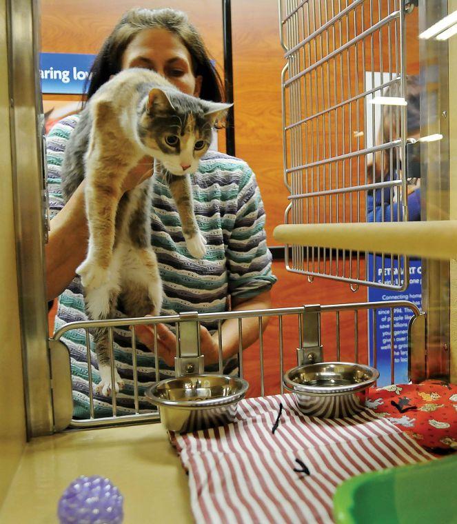 Should I Adopt A Cat From Petsmart