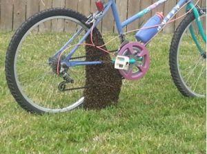 Prevent honey bees invasions