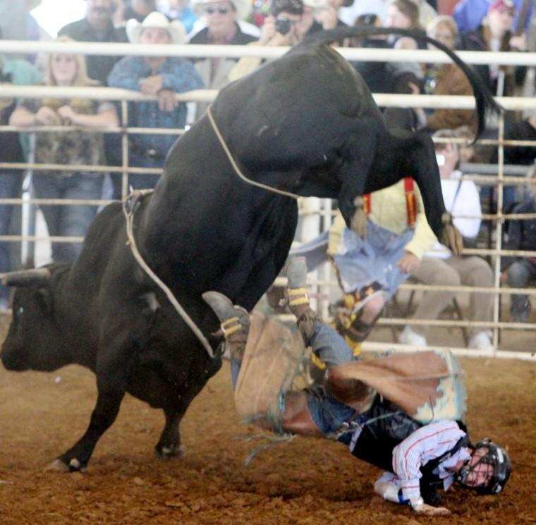 Bull Bash At Fort Bend County Fair Fort Bend Herald Sports