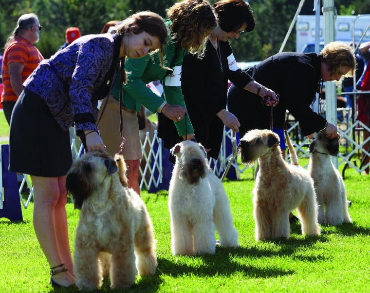 Wine Country Circuit Dog Show