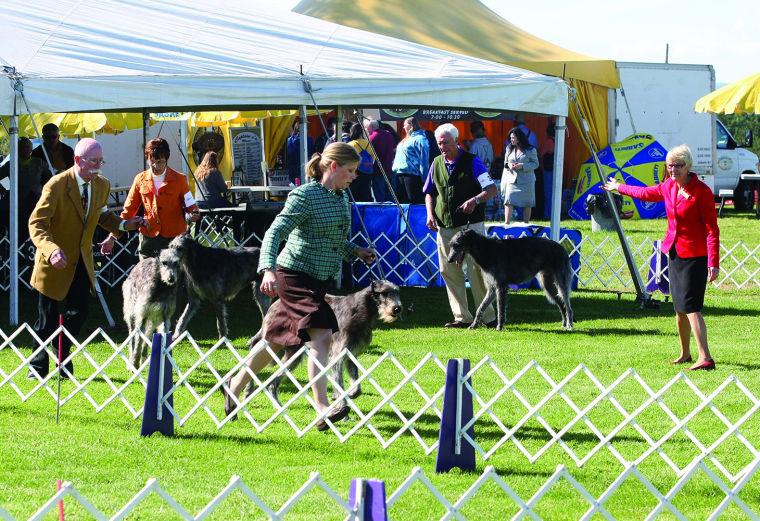 Irish Dog Show Circuit
