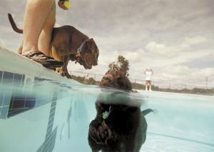 Dixon park pool to be dedicated in honor of doris buffett on monday for Dixon park swimming pool fredericksburg va