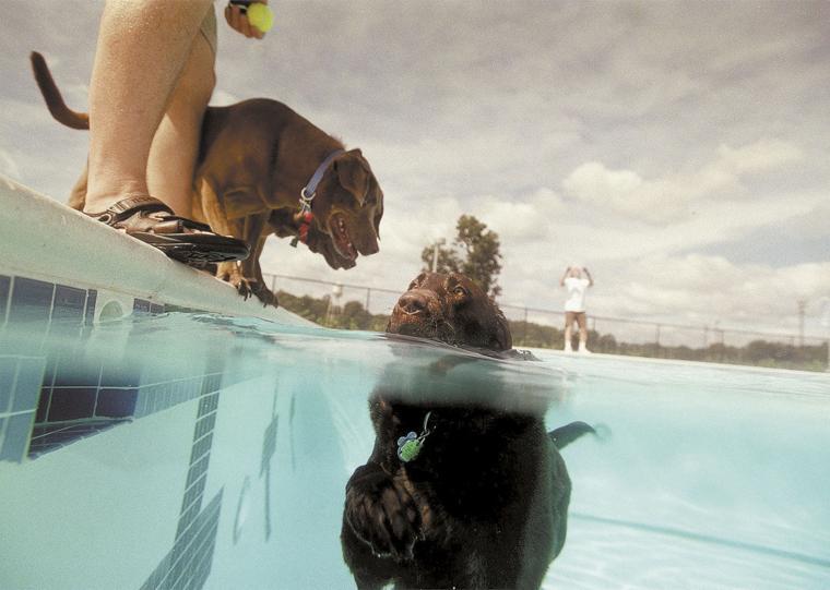 Dog pool parties news for Dixon park swimming pool fredericksburg va
