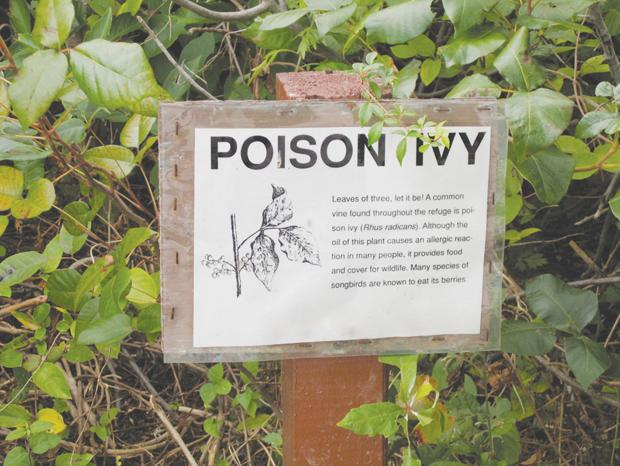 Poison center issues poison ivy warning reminder