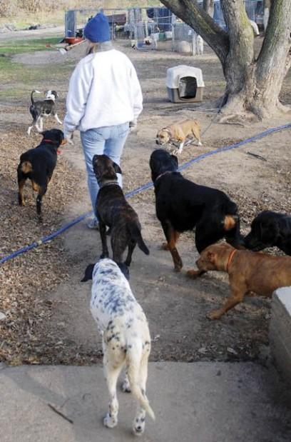 Show Dog Leads Missouri