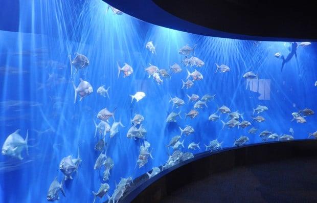 henry doorly zoo unveils renovations to scott aquarium