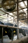 Chamber Studies Dairy Expansion