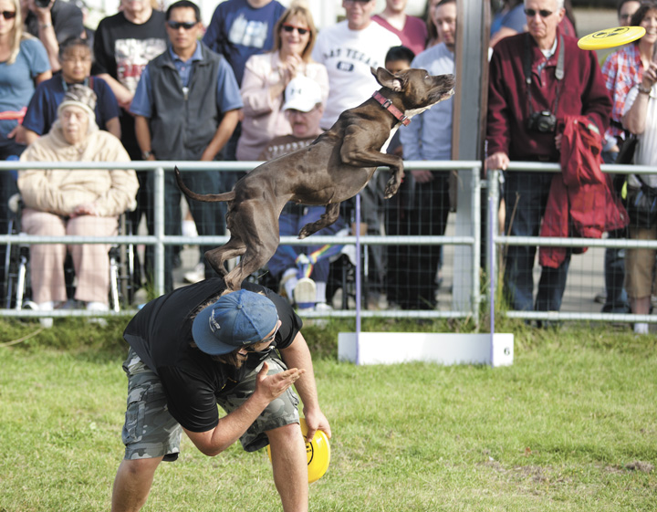 <p>Ethan Wilhelm and his dog Bootsy perform Frisbee tricks for the crowd during Wednesday's 'Canine Stars' show at the Alaska State Fair in Palmer.</p>