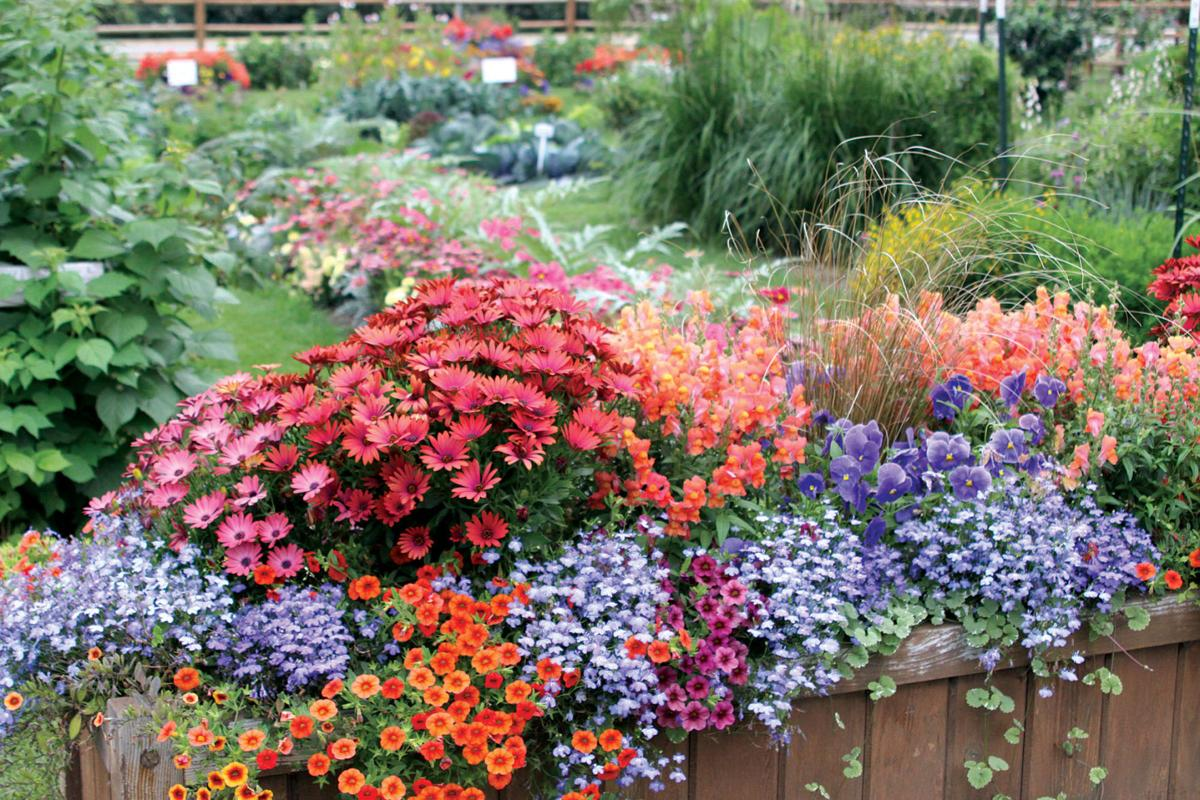 Image Result For Home And Garden Faira
