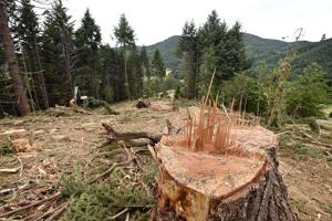 Mighty oaks: Restoration projects aim to bring back an iconic Oregon landscape