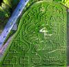 100115-cgt-nws-corn-maze-gv6.JPG