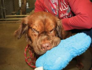 SPCA looks for owners of neglected dogs