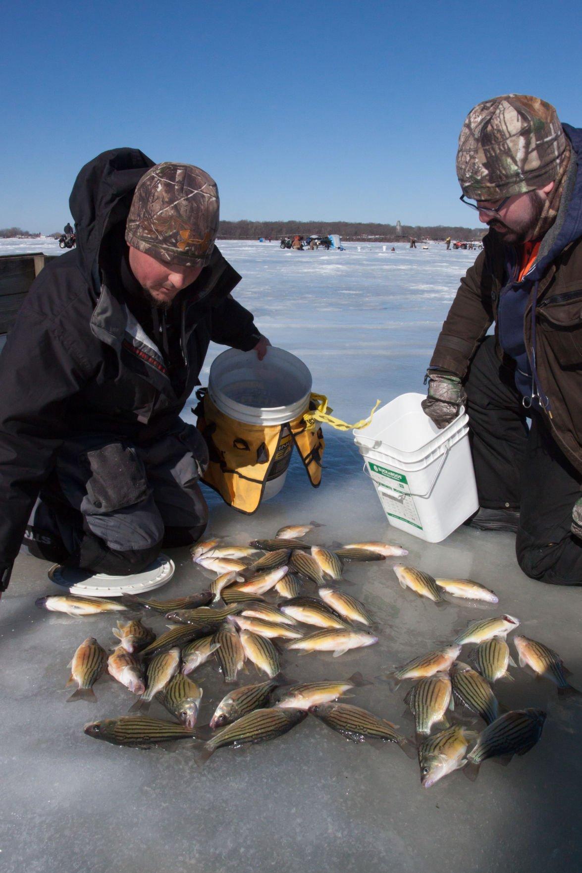 Photos yellow bass bonanza ice fishing tournament north for Ice fishing tournament