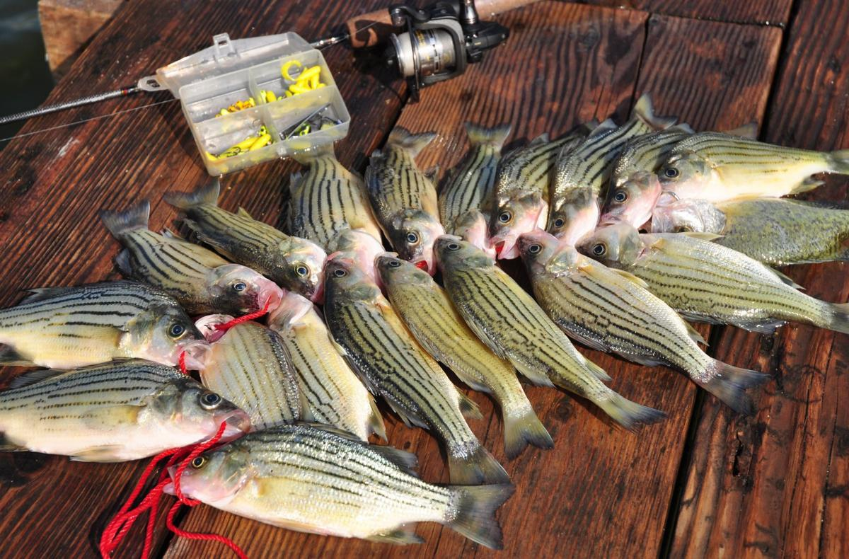 Yellow bass action heating up at clear lake features for Clear lake iowa fishing