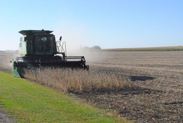 Frank's friends harvest soybeans