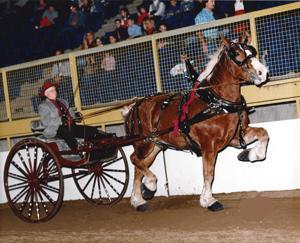 Mason City man to join Iowa Draft Horse Hall of Fame