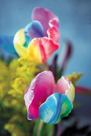 Rainbow Tulips Splash Color In Bouquets