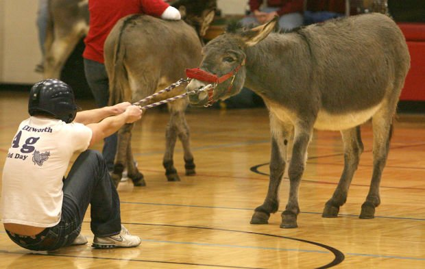 an afternoon of donkey basketball