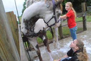 Winnebago Fair: Livestock shows