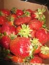 Joy of June --- strawberries