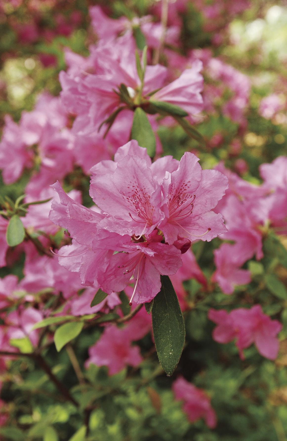 031617_springblooms
