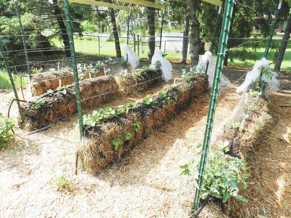 Growing plants in straw bales all access for Straw bale gardening joel karsten