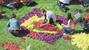 Mount Vernon High Schools resumes tulip tradition