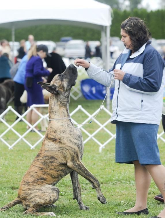 Dog Training Skagit County