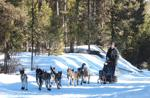 <p>Bryce Mumford of Whitney, Idaho, mushes his team of dogs toward the finish of a 317-mile endurance race in Montana on Feb. 17.</p>