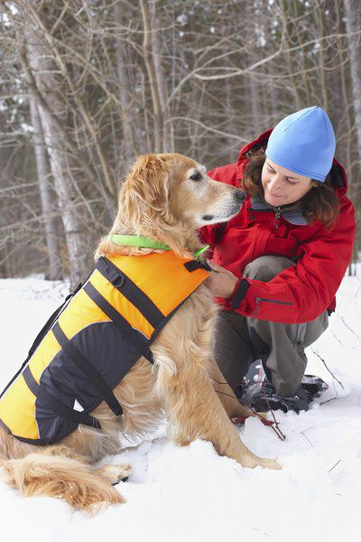 Ohio Rules For Service Dogs