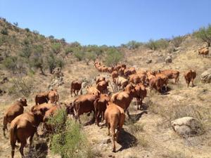 Ranch Day