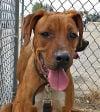 Take Me Home: Kings SPCA November 27