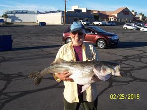 Big Catch 36 Pound 44 Inch Striper Caught In Lake Havasu