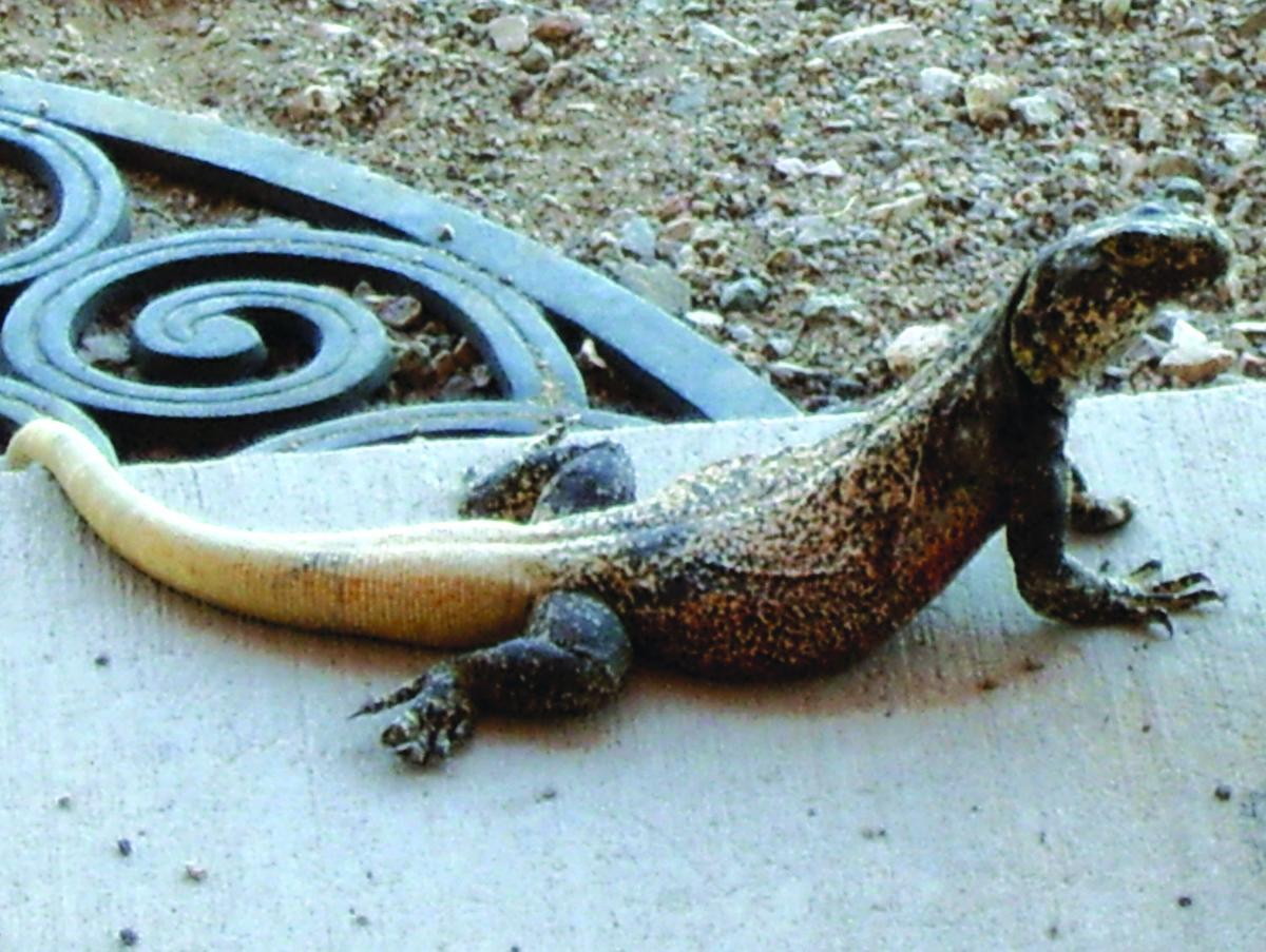 Gary Gecko* Gecko·& Jon Carter V's Hoxton Whores - Double Drop