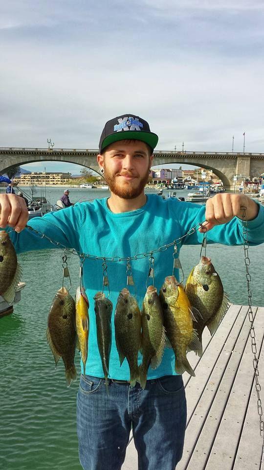 Smallmouth bass caught in lake havasu sets an arizona for Larry king fish oil