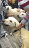 Doggies in school