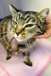 Kaila Matteson, cat adoption counselor