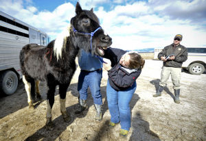 Complaint to terminate Rocky Acres Rescue filed in court