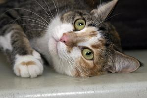 Pet of the Week: Two positively adorable kitties