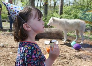 PHOTOS: Scovill Zoo Wolf Birthday Party